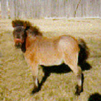 Charm as a foal