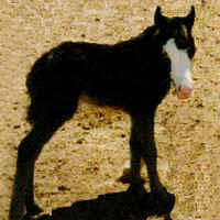 Feather's foal Taxman