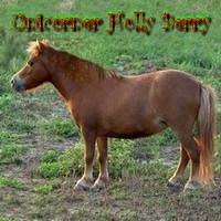 Unicorner Holly Berry