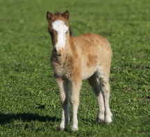 Locket's 2012 filly