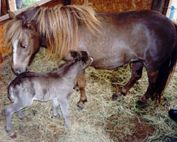 Mary and her first foal