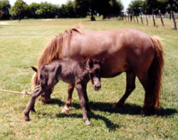 Mary and 96 foal