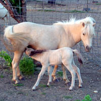 Pinky with foal