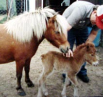 Rose and her first foal