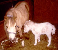 Taffy and her 96 foal