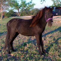 Unicorner Black Walnut