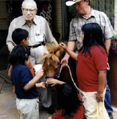 Therapy miniature horses